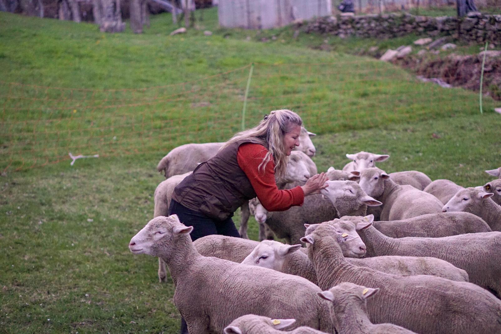 Welche eine Freude wenn manchmal ein Schaf zahm wird