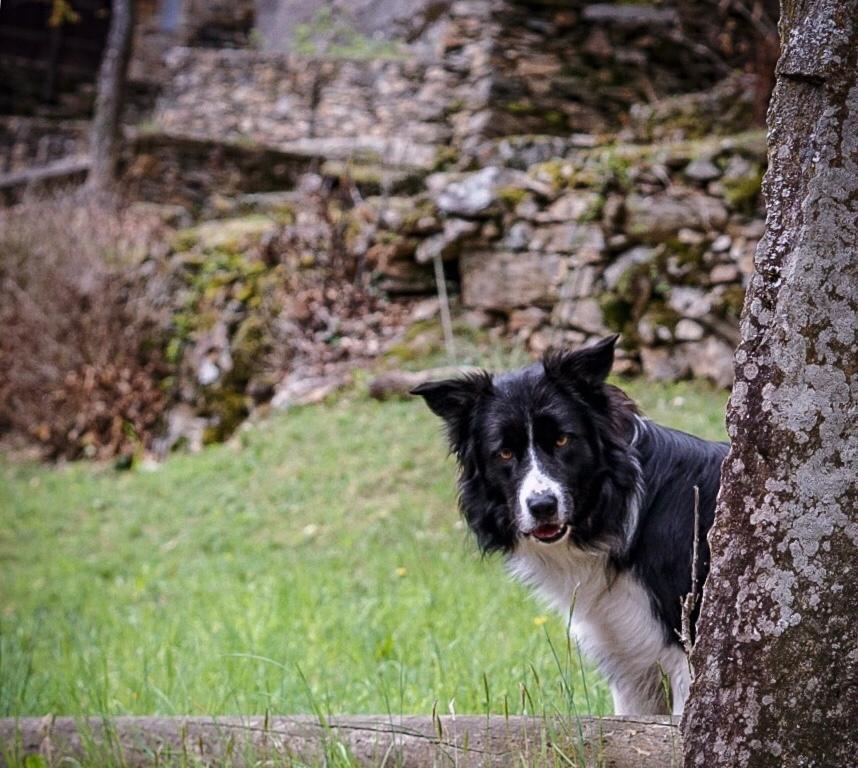 Kuckuck wo sind die Schafe?