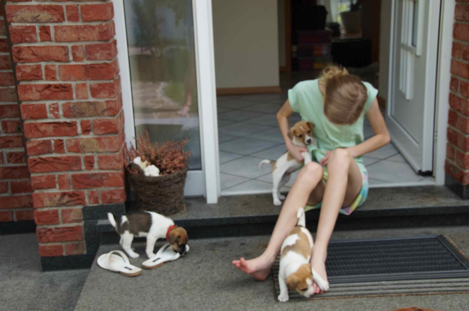 Caba, Caramel und Cookie beim Spielen mit Tabea