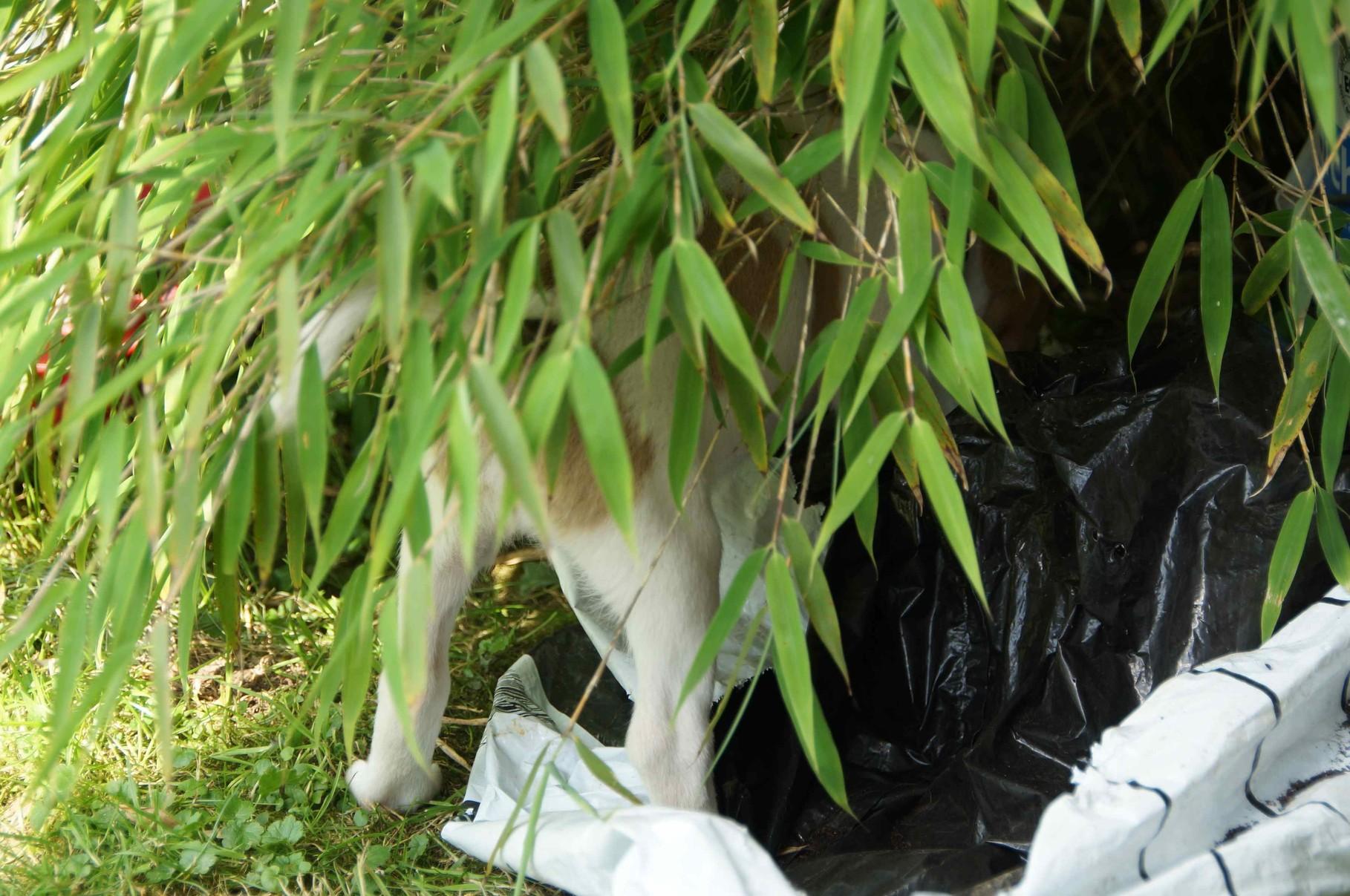"""Caramel unterm Bambus""""zelt"""""""