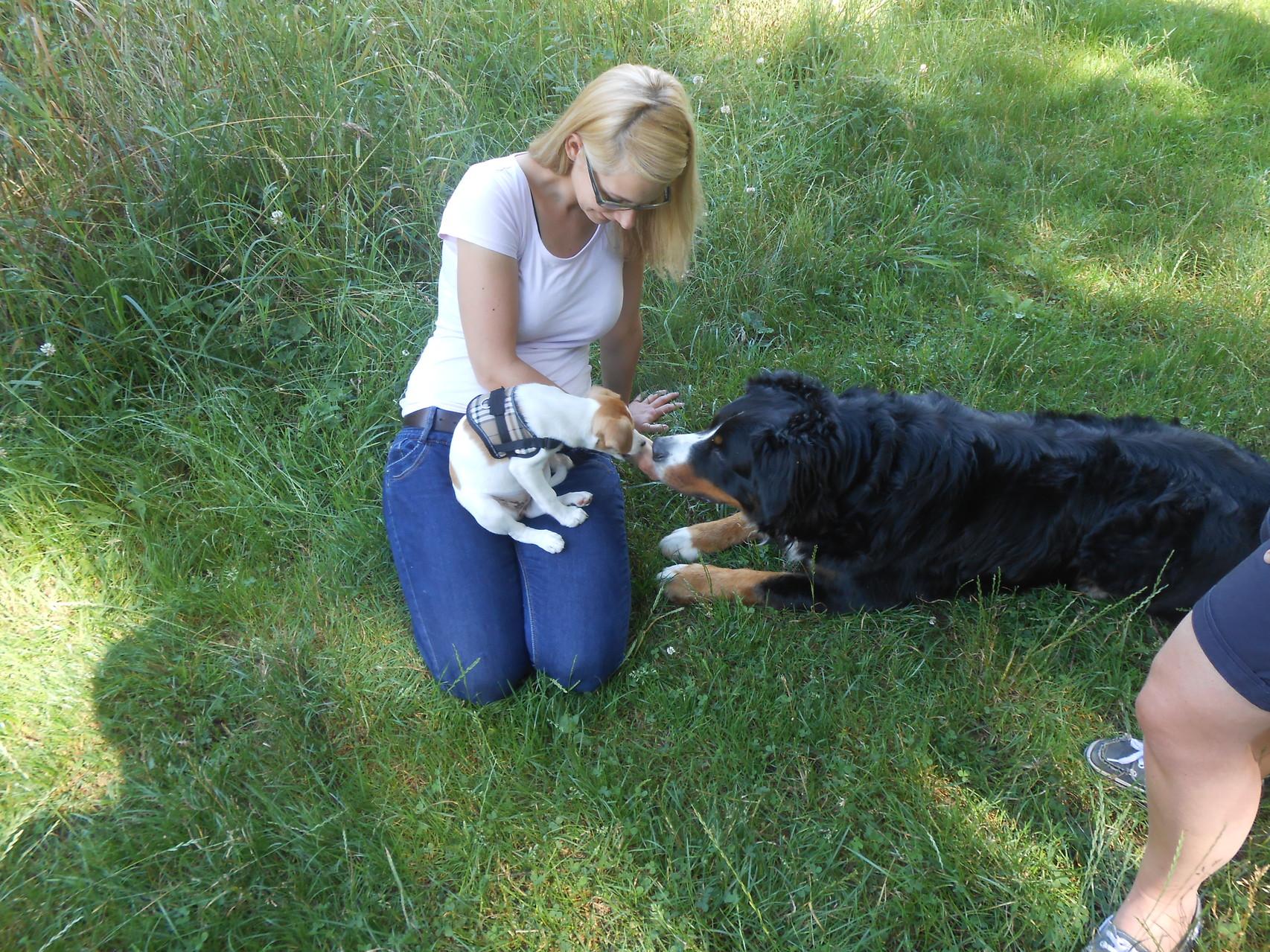 Besuch bei Cookie und ihren Leinenhaltern während der 2 Wochen, die Cody wieder bei uns war!