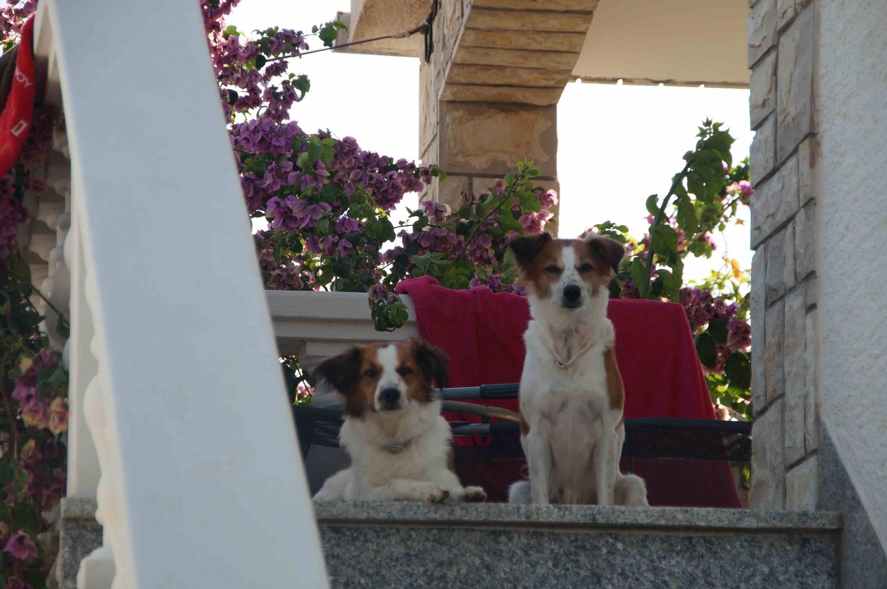 Wir bewachen unseren Hauseingang und behalten von hier aus alles im Blick!