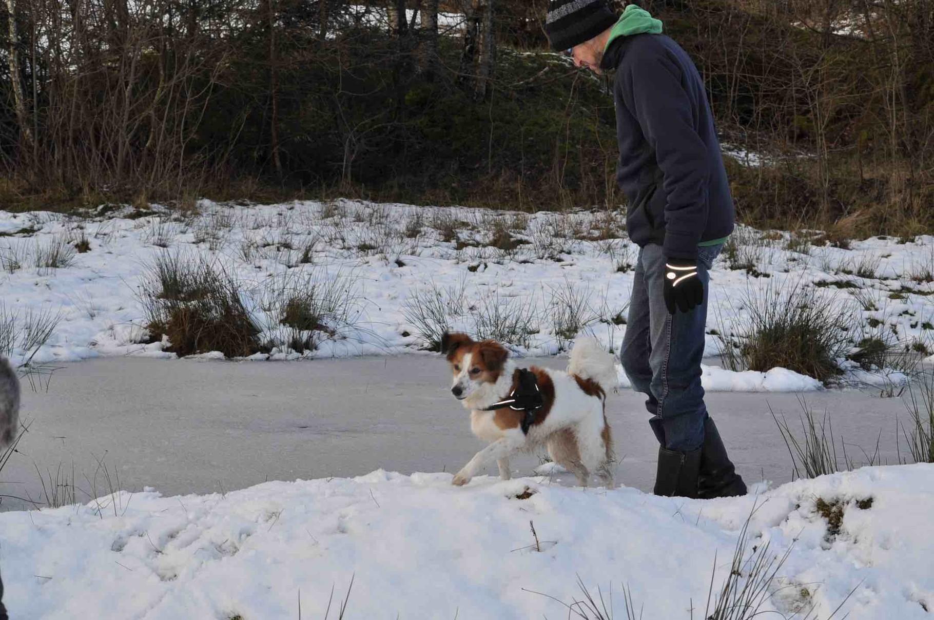 Bailey und der Chef auf dem Eis