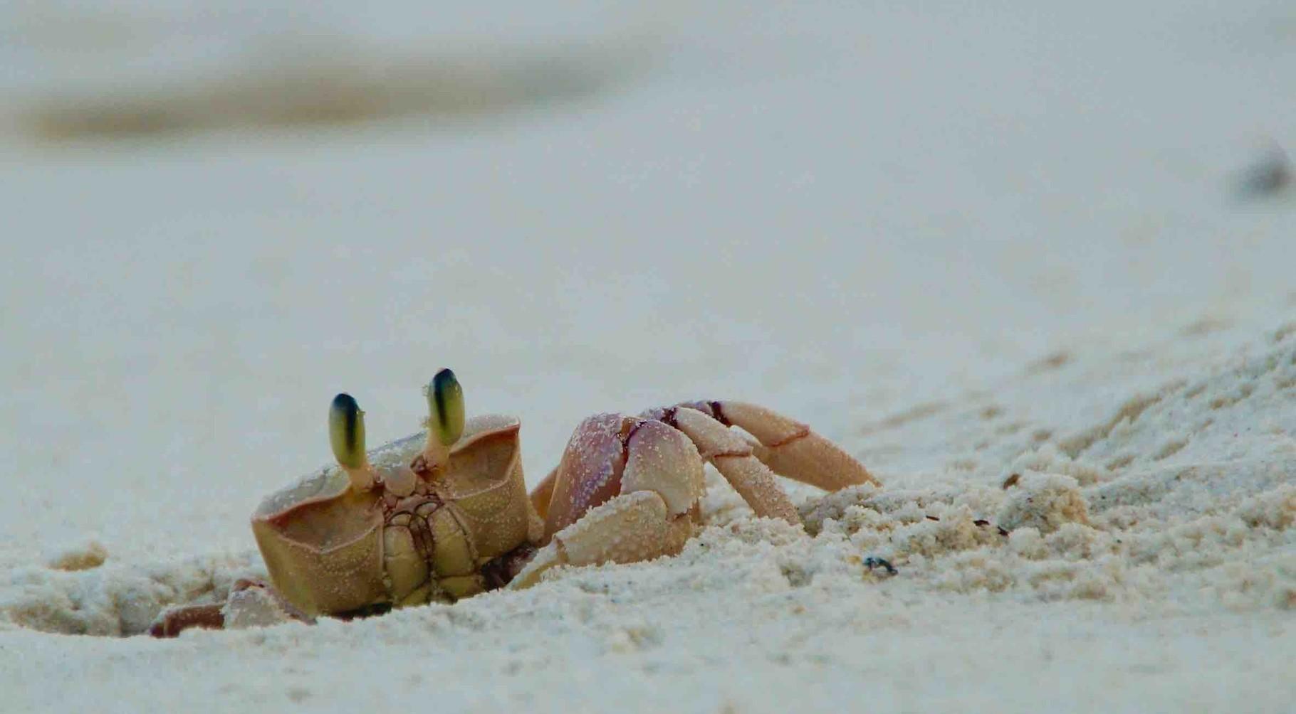 ein Krebs am Strand