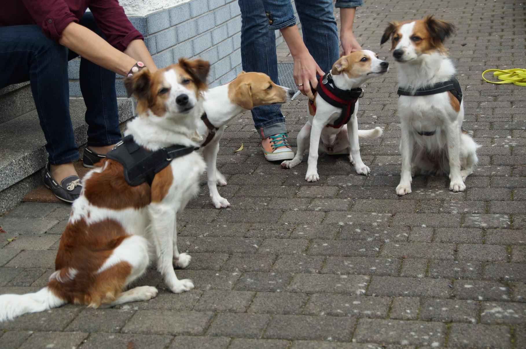 Versuch eines Gruppenbildes :-), v.l. Bailey, Caramel, Cookie, Benaja