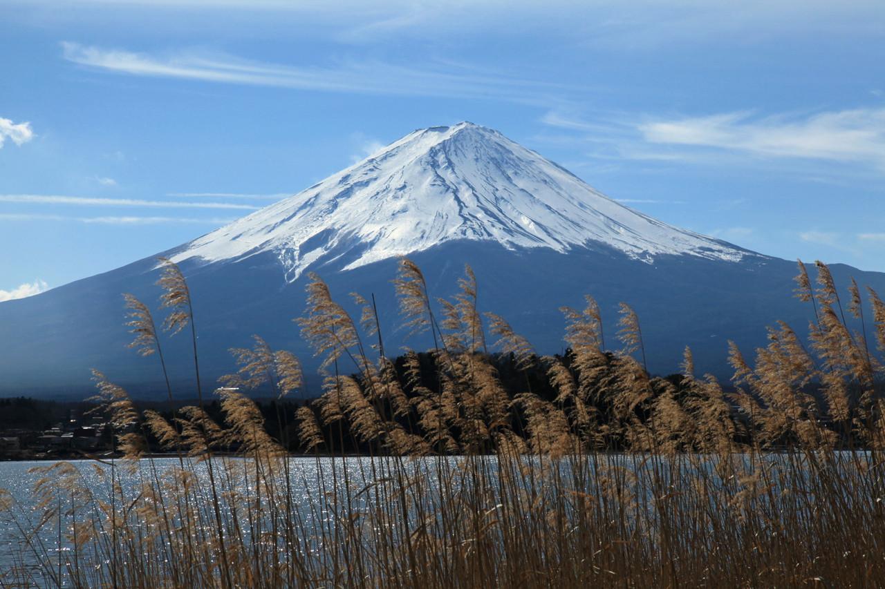 河口湖の葦富士 才膳会員