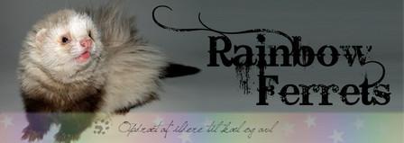 Rainbow Ferrets