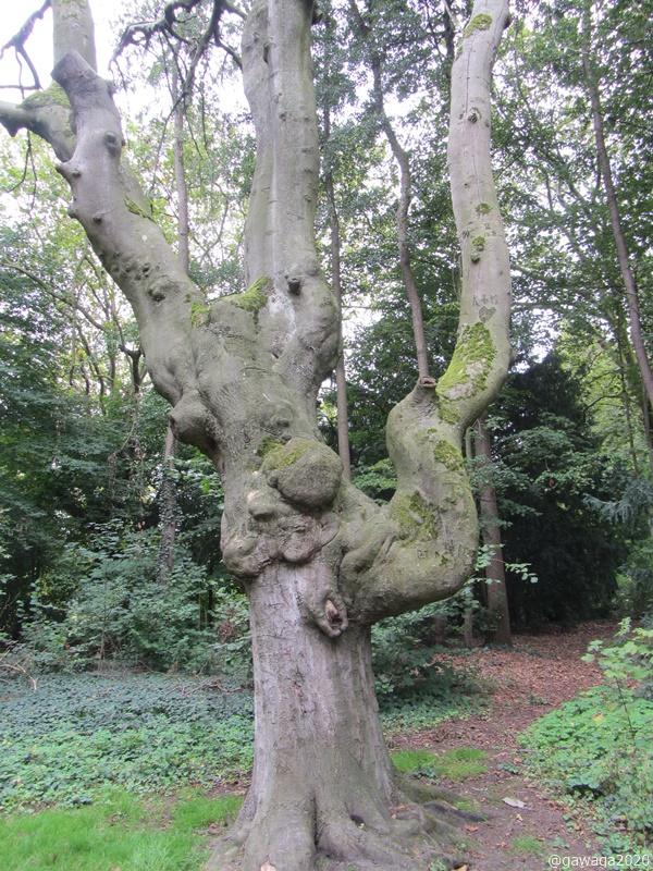uralte Bäume
