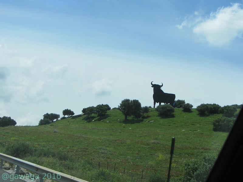 unterwegs grüßt wieder der Stier