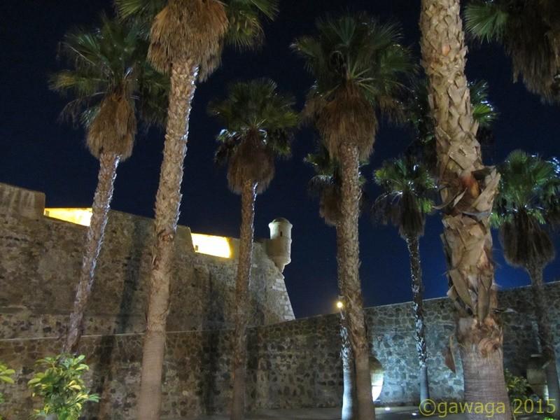 abends unter Palmen