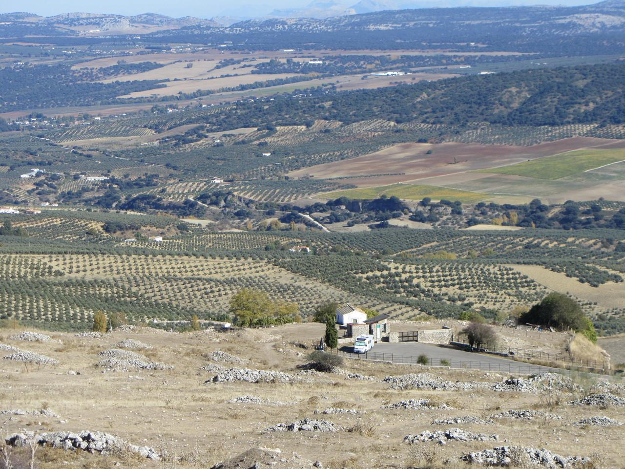 Oliven und Berge
