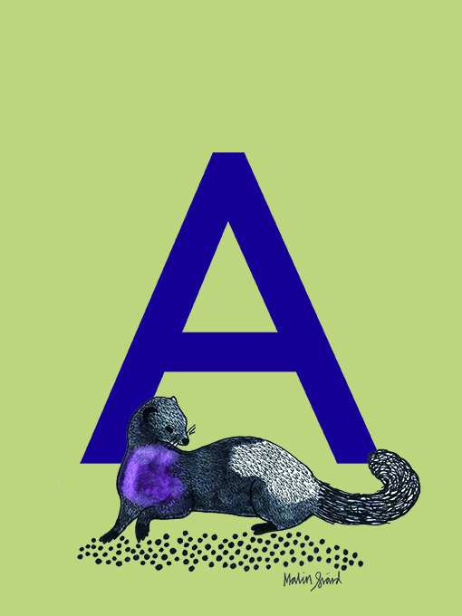 Alphabet Print A with mink