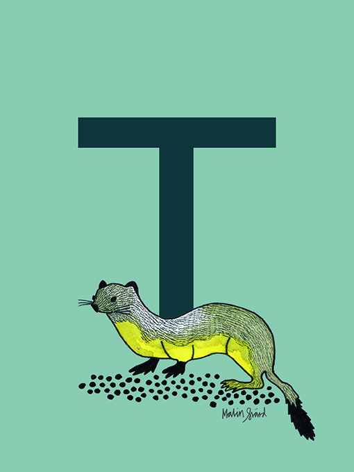 Alphabet Print T with weasel