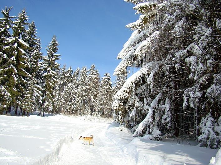 herrliche Winterlandschaft bei Mähring