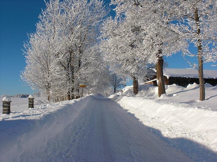 Allee zum Poppenreuther Berg im Winter von Mähring aus