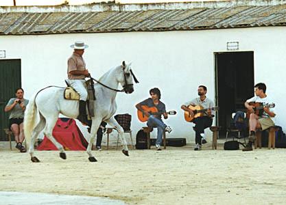 Manolo läßt gerne seine Pferde zur Gitarrenmusik tanzen