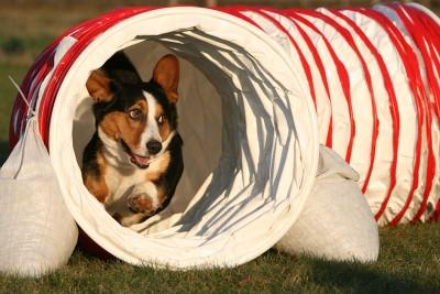 """Der Tunnel """"beschleunigt"""" die Hunde"""