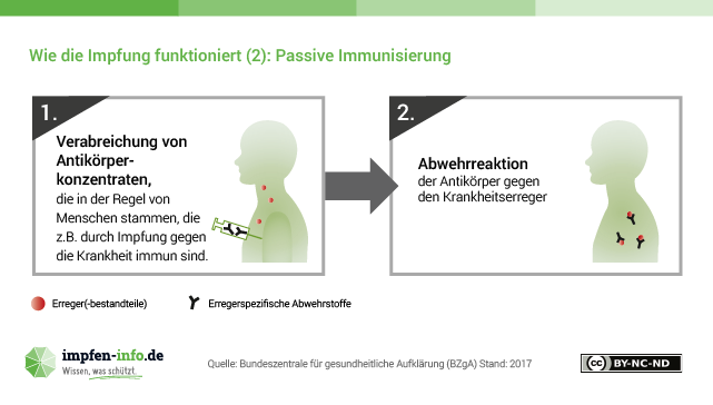 Quelle: Bundeszentrale für gesundheitliche Aufklärung (BZgA), impfen-info.de, http://www.impfen-info.de/mediathek/infografiken/immunsystem/, CC BY-NC-ND
