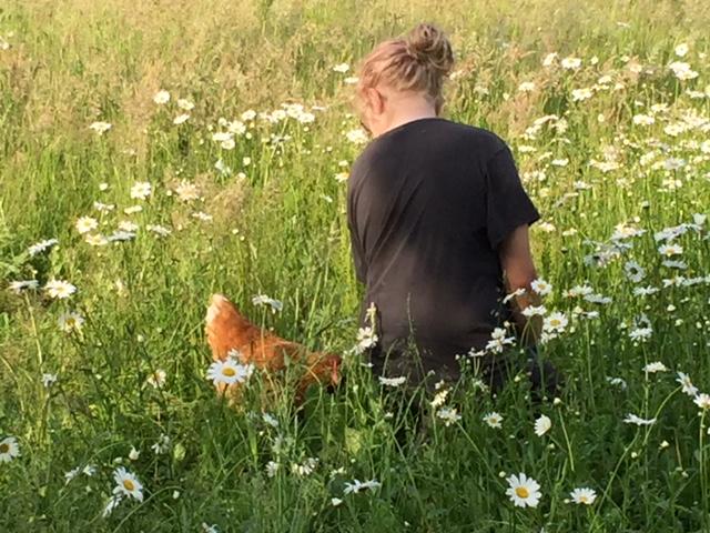 Hühner sind stets neugierig