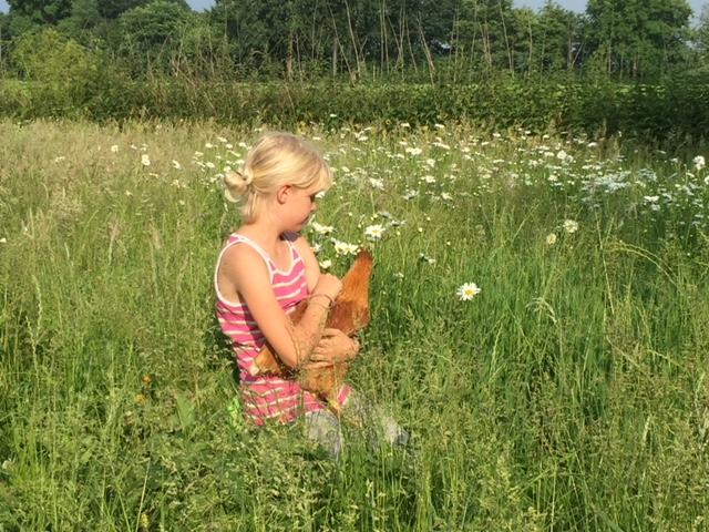Unsere Kinder lieben es sich mit den Hühnern zu beschäftigen