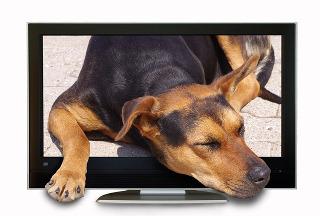 freenet TV - faszinierende HD Sender kinderleicht mit DVB-t2 empfangen