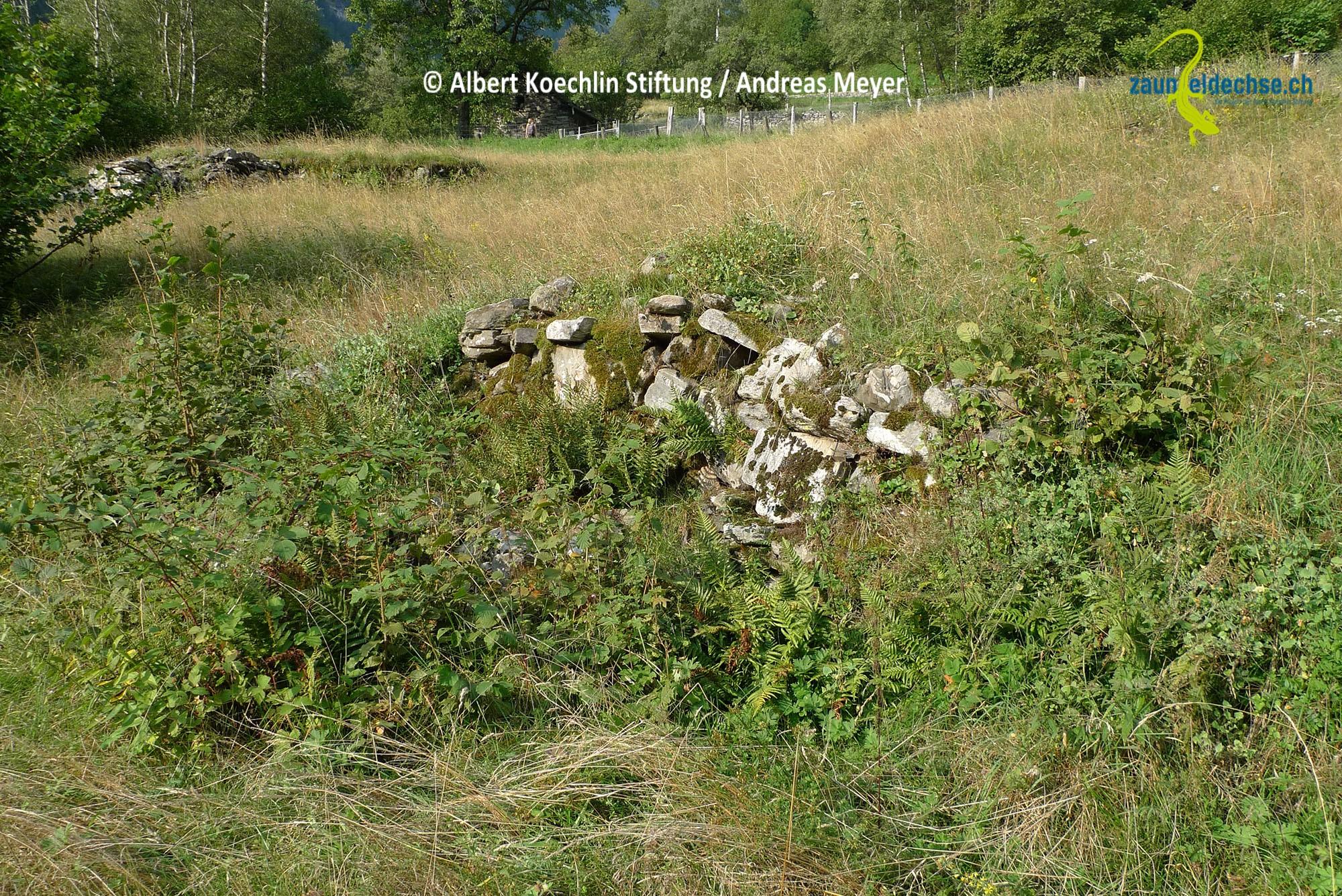 Dieser Steinhaufen wird durch die umgebende Vegetation hervorragend ergänzt. Beim Mähen der Wiese bleibt ein grosszügiger Altgrassaum stehen. Gehölze die aufkommen, entfernt man nur sporadisch.