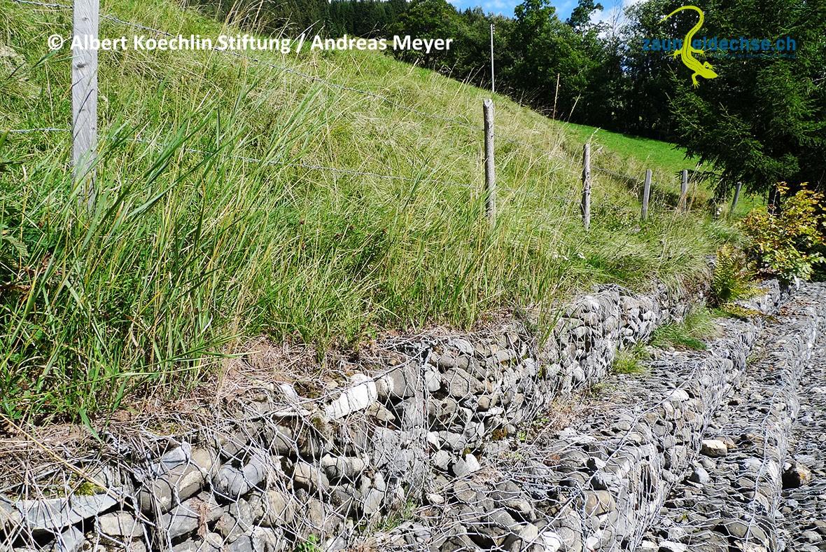 Steinkörbe: Die Zauneidechse besiedelt sie, wenn die Füllung eine geeignete Korngrösse aufweist.