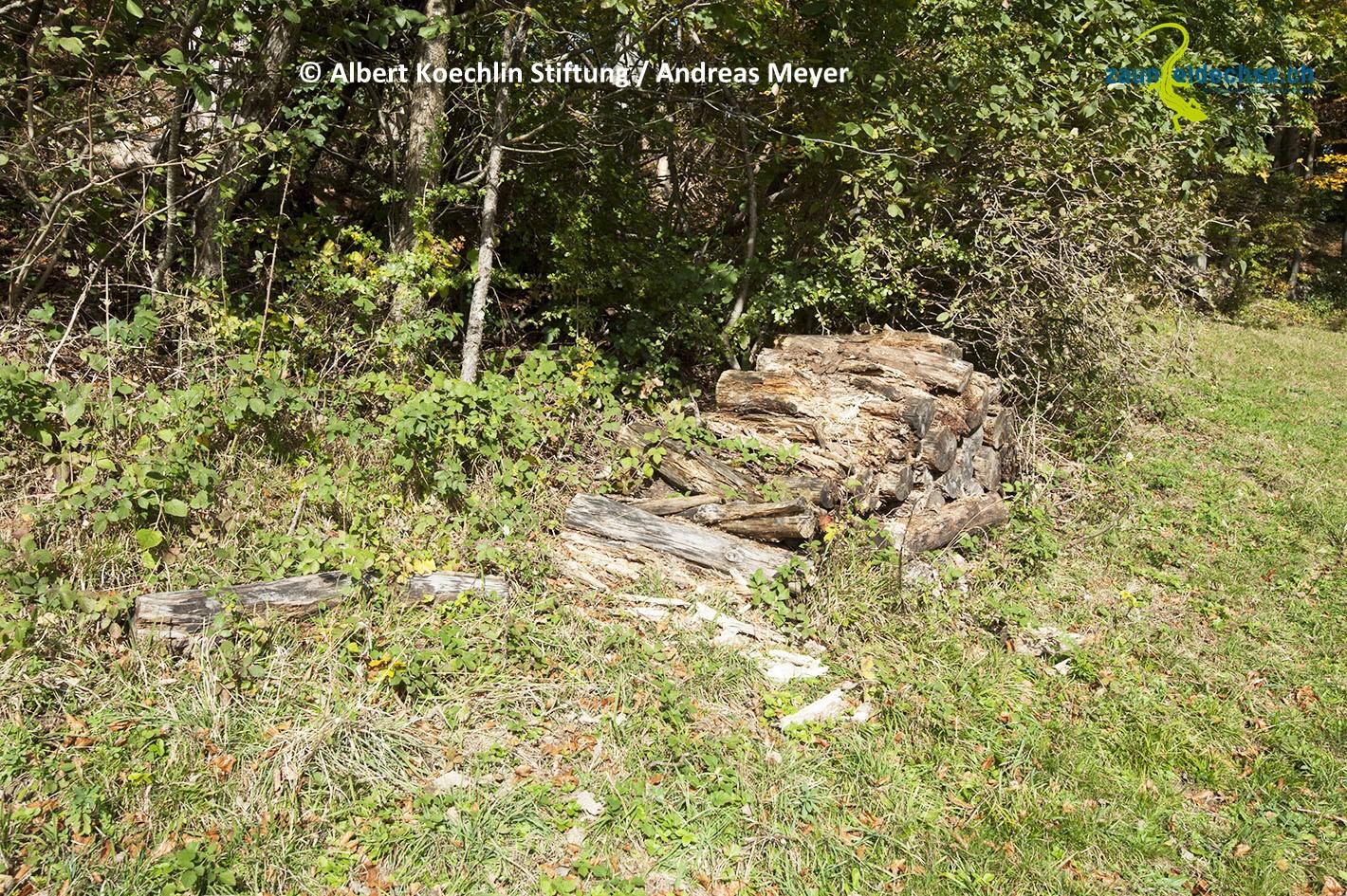 Totholz verrottet und muss von Zeit zu Zeit ersetzt oder ergänzt werden.