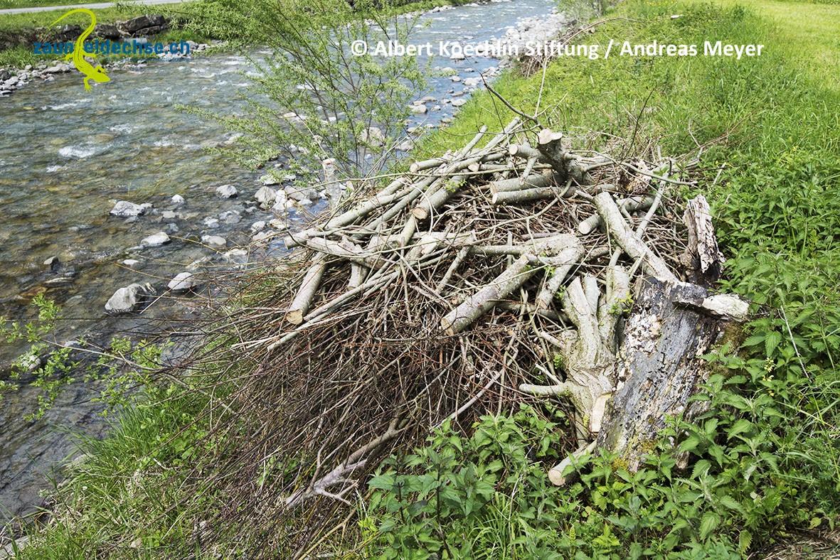 Gehölzrückschnitt am Bachufer: Idealerweise legt man damit Haufen an, die den Eidechsenlebensraum bereichern.
