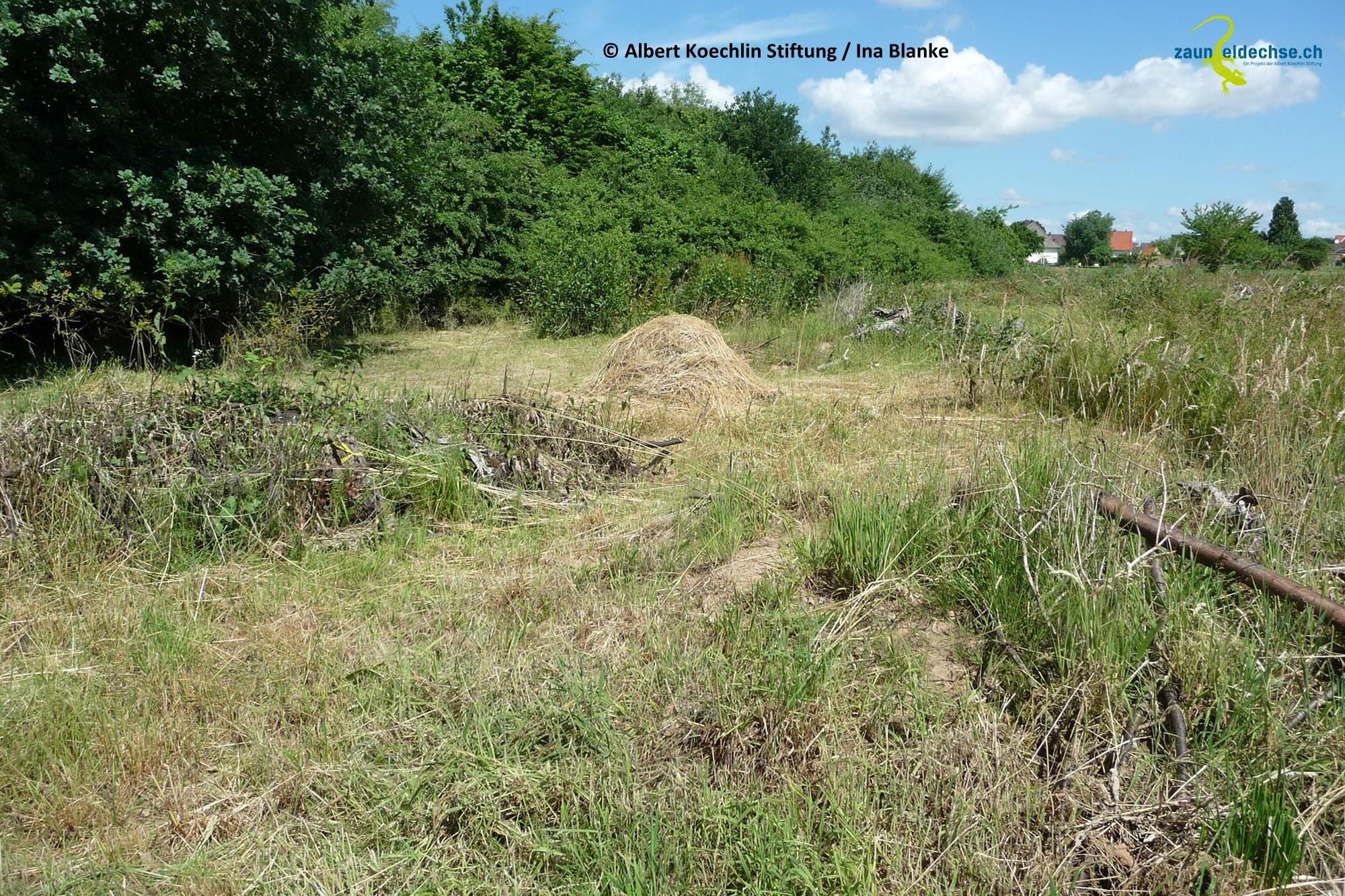 Beispiel eines für Eidechsen idealen Waldrandbereichs. Der breite Übergang vom Strauchgürtel des Waldes ins Kulturland wird charakterisiert durch ein Mosaik aus gestaffelt gemähten Grasbereichen, Gebüschen und Kleinstrukturen.