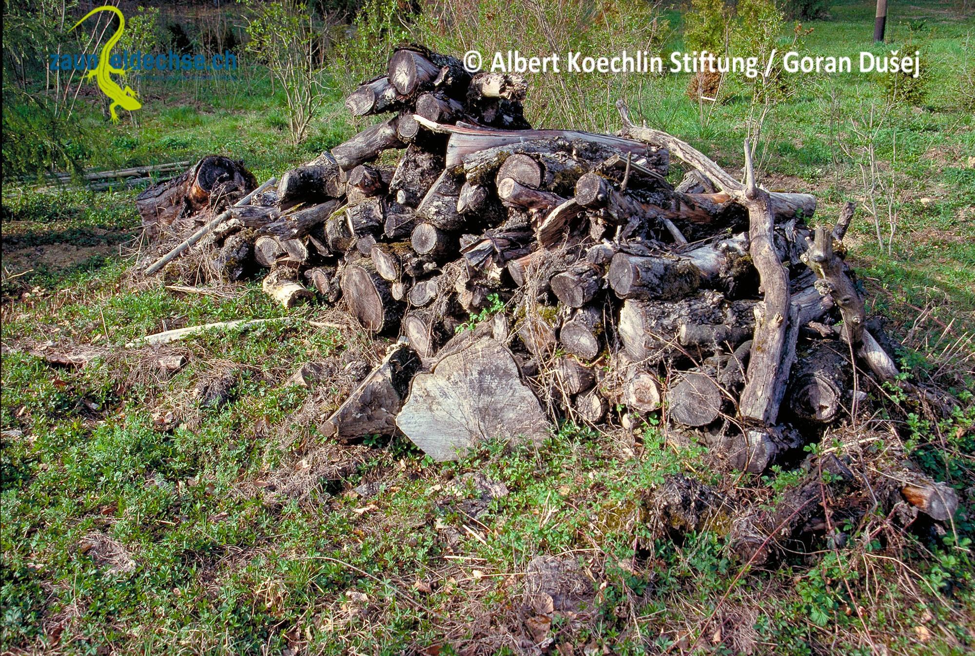Holzbeigen können als Brennholzvorrat dienen, aber auch in freier Form für die Zauneidechse angelegt werden.