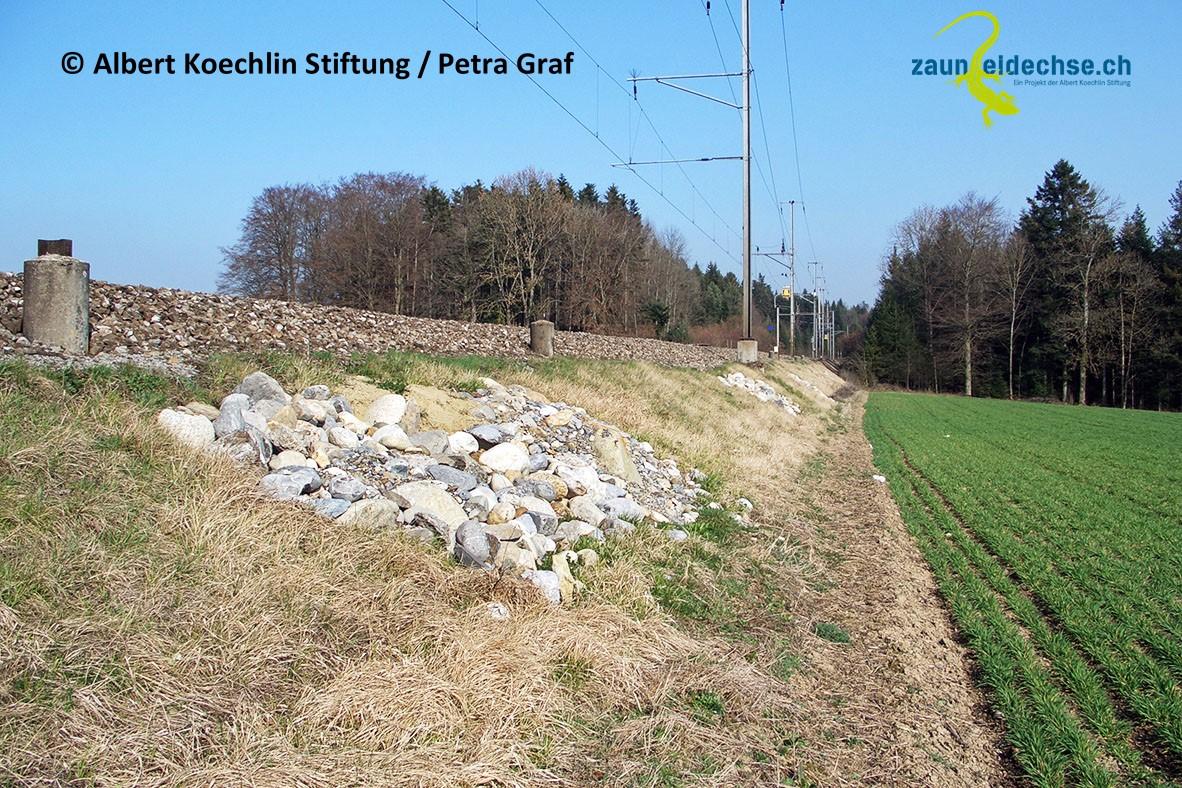 Neu angelegte Steinlinse am Bahndamm. Solche Massnahmen sind nur dort sinnvoll, wo Zauneidechsen die Böschungen nicht ohnehin schon besiedeln.