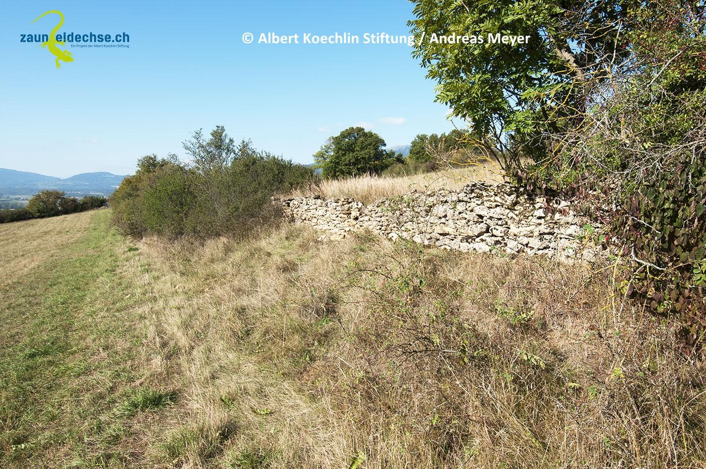 Trockenmauern sind besonders wertvolle Lebensraumstrukturen, wenn sie von Kraut- und Altgrassäumen begleitet werden.