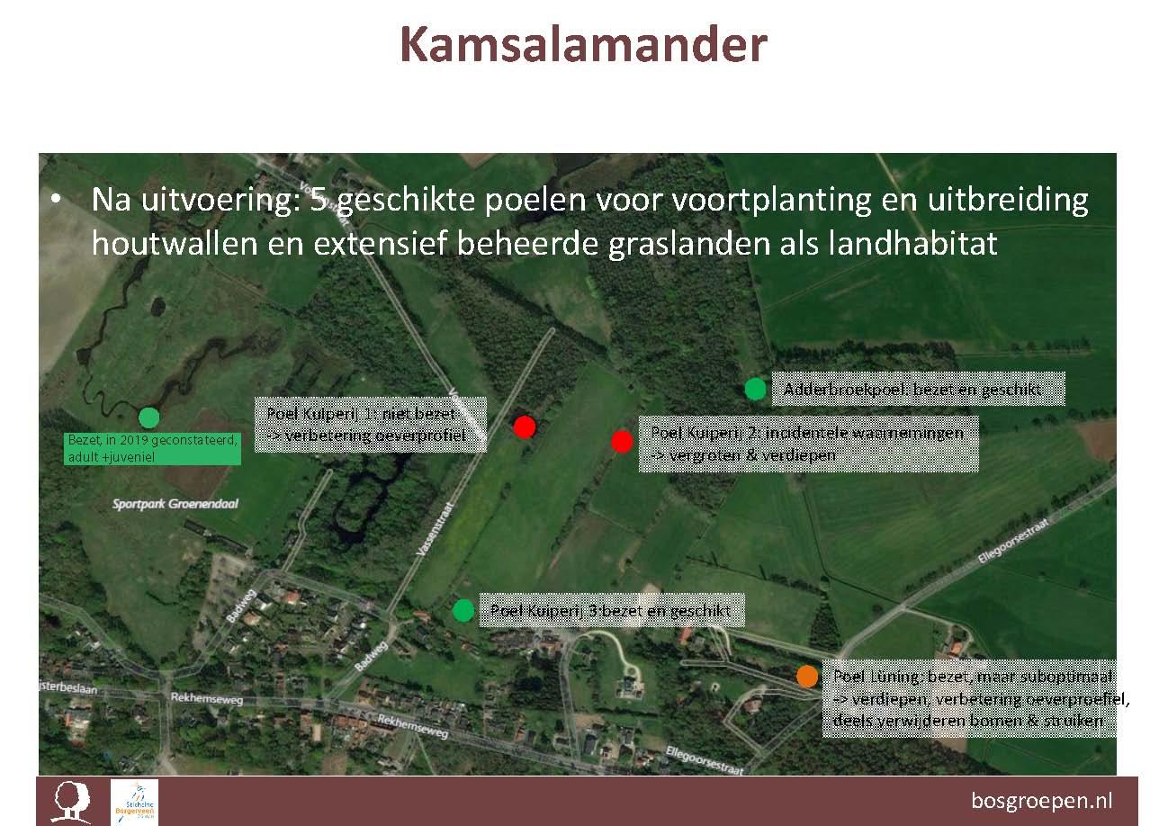 De huidige situatie voor de Kamsalamander. In 2019 werd nog een zesde bezette en optimale locatie ontdekt.