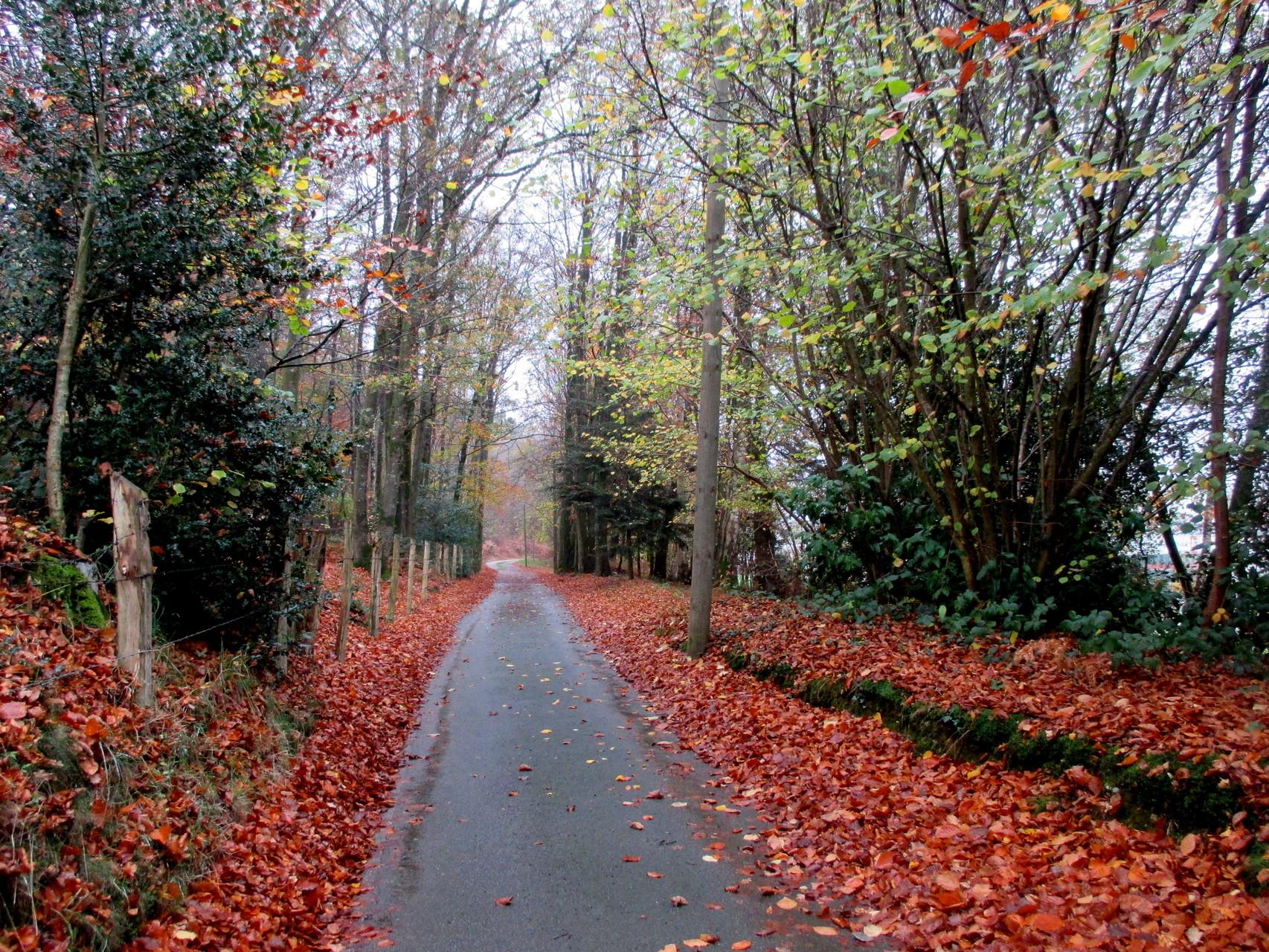 Départ pour une petite heure de marche, ciel couvert, petite pluie... normande