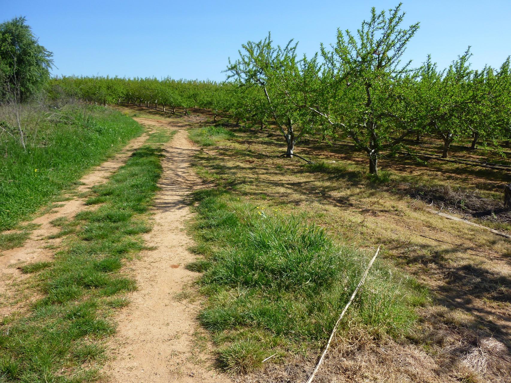 Le chemin démarre en traversant quelques champs d'oliviers et d'abricotiers