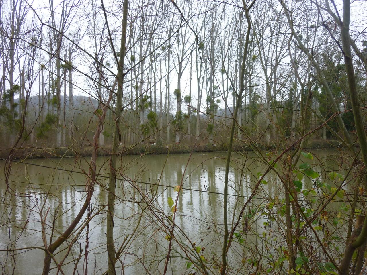Promenade le long de la Seine, vers Amfreville sous les Monts, quelques biches au loin