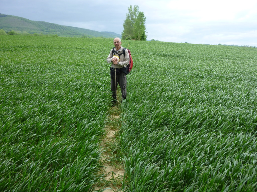 Sentier au milieu du champ de blé