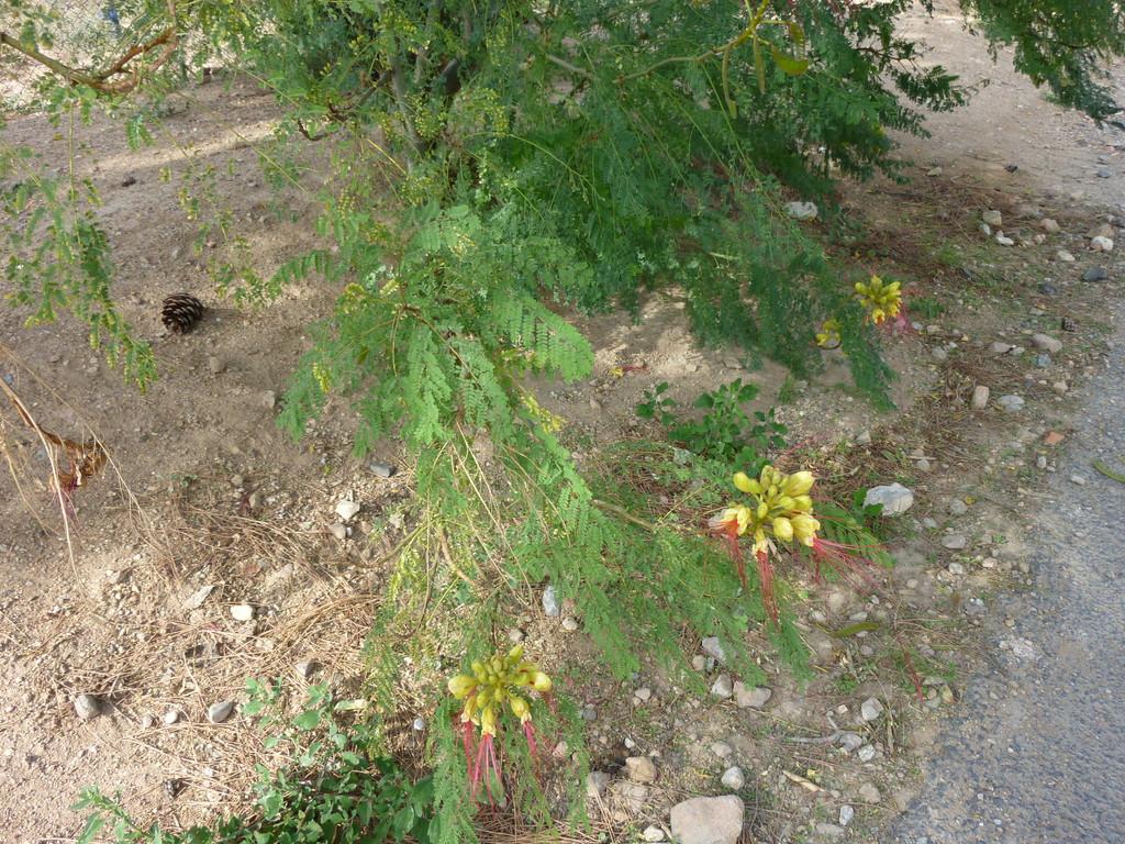 Végétation locale