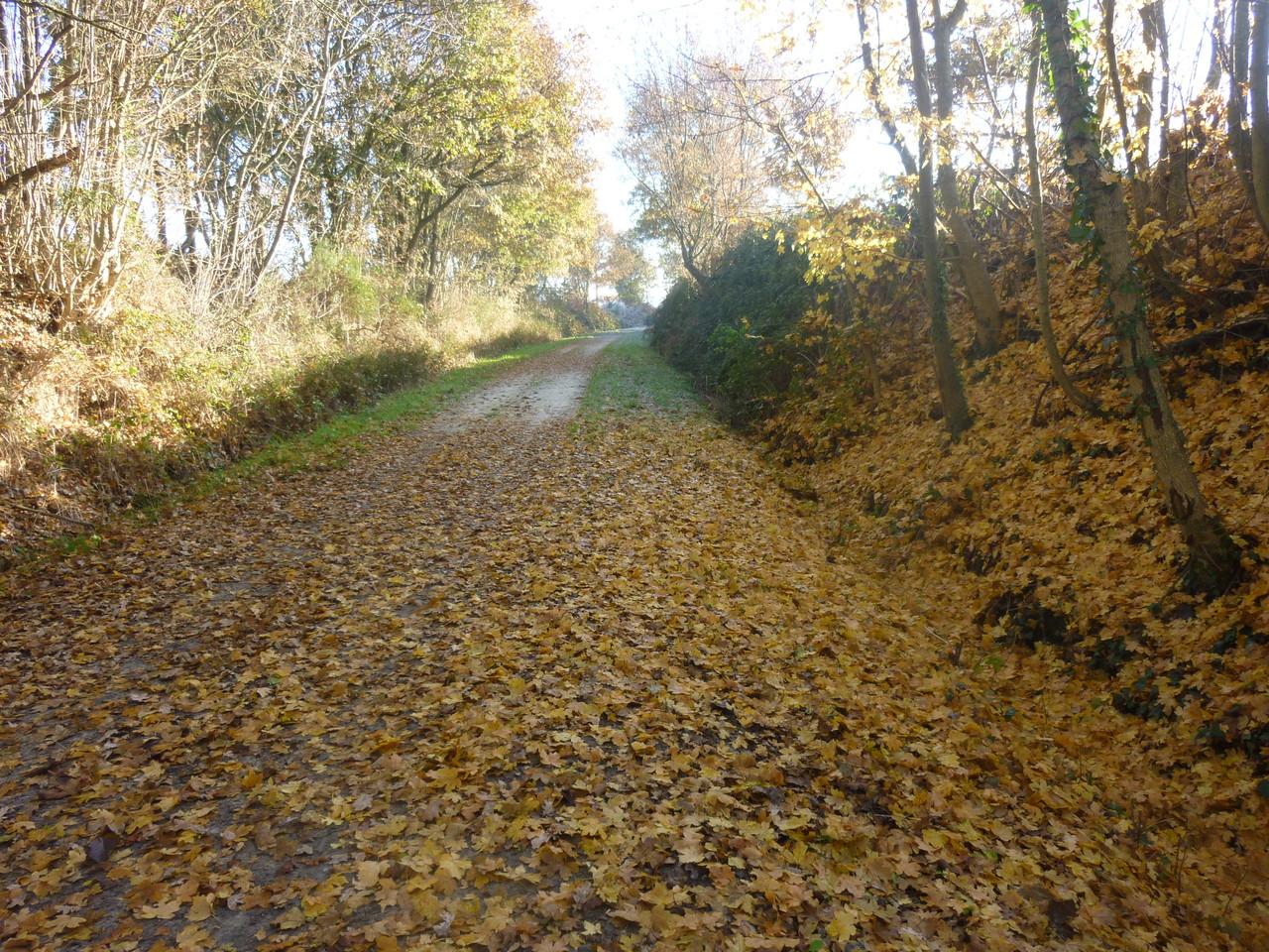 Encore de belles couleurs d'automne