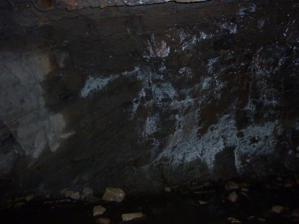 Dans les sous bois, le long du GR qui borde le barrage