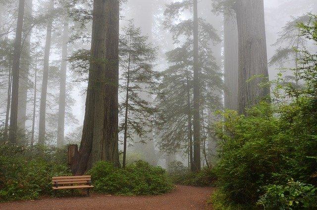 Le Sequoia … géant des forêts