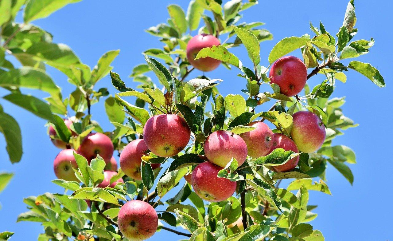 Plantez vos arbres et mangez vos fruits