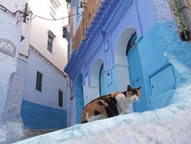 街には可愛いシャウエンの猫さんがいっぱい♡