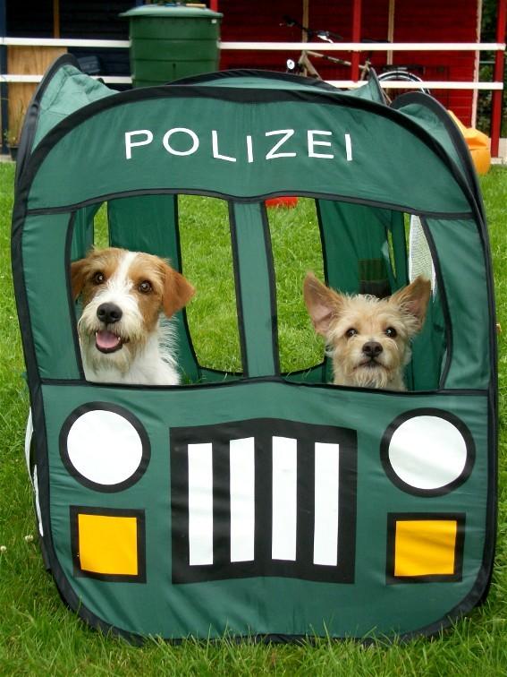 Ach früher wollten wir Polizeihunde werden! ein Auto haben wit ja schon!