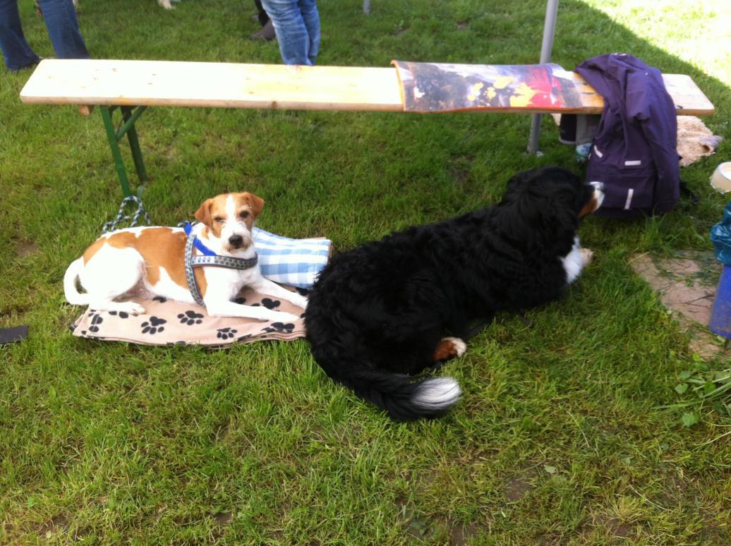 tolle neue hunde kennengelernt