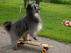 auf dem Skateboard bin ich begabt / Lady is talented on the skateboard