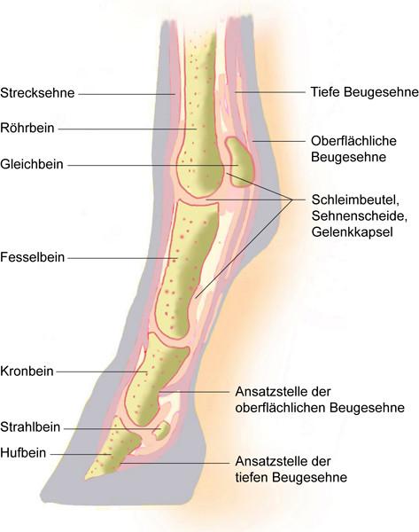 Blog, Tierphysio Kappeln, Tierakupunktur Kappeln, Tierphysiotherapie ...