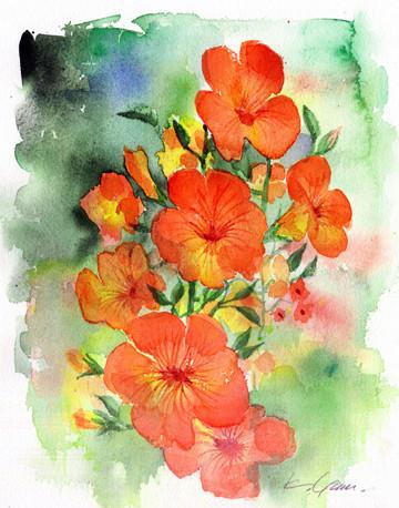 のうぜんかずら campsis grandiflora