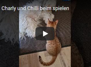 Video Charly und Chilli beim Spielen